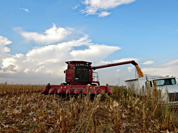 https://ksugrains.files.wordpress.com/2014/11/ae345-unloading2bcorn.jpg
